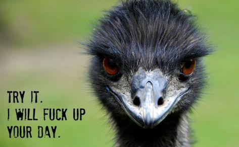 o-EMU-facebook